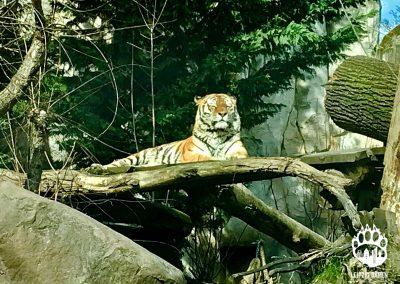 Zoo (1)