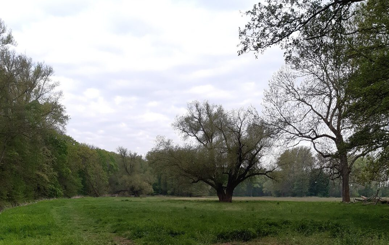 Wanderung durch den Planitzwald [25/07/20]